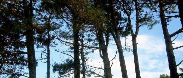 Bosque en Alquiler de cabañas en Valeria del Mar